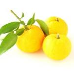 3個の柚子